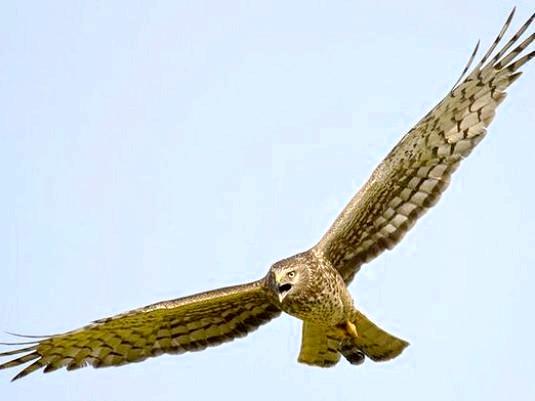 Фото - Які бувають птахи?