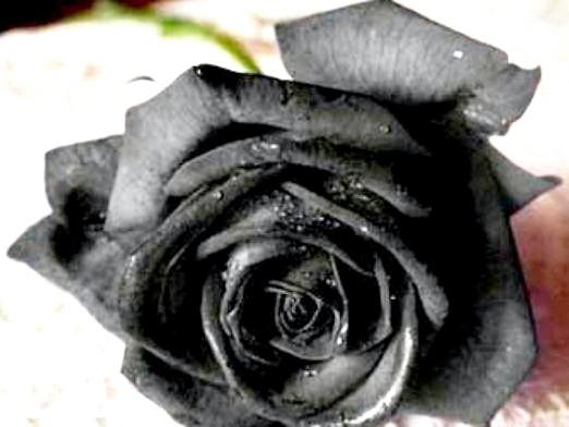 Фото - Які квіти на похорон?
