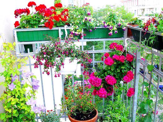 Фото - Які квіти посадити на балконі?