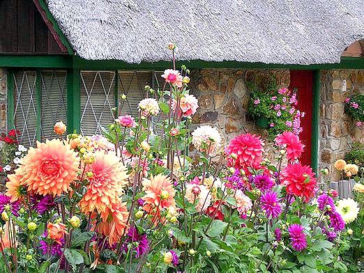 Фото - Які квіти посадити на дачі?