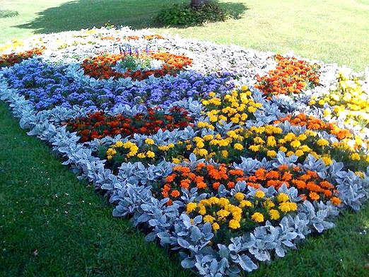 Фото - Які квіти посадити на клумбі?