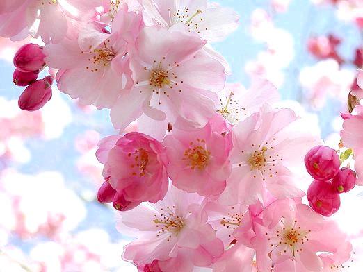 Фото - Які квіти найкрасивіші?