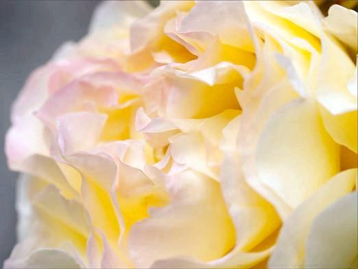 Фото - Які є квіти?