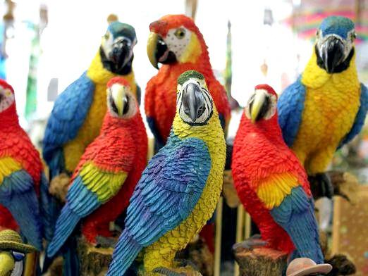 Фото - Які є папуги?