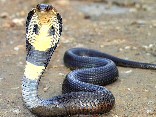 Фото - Які є змії?