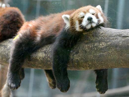 Фото - Які тварини впадають в сплячку?