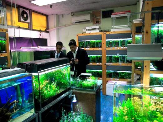 Фото - Який акваріум краще?