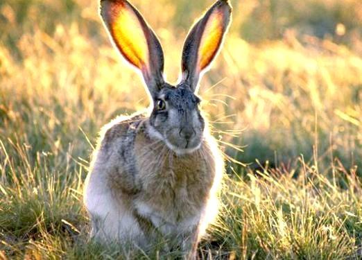 Фото - Який він: заєць?