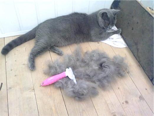 Фото - Кішка линяє: що робити?