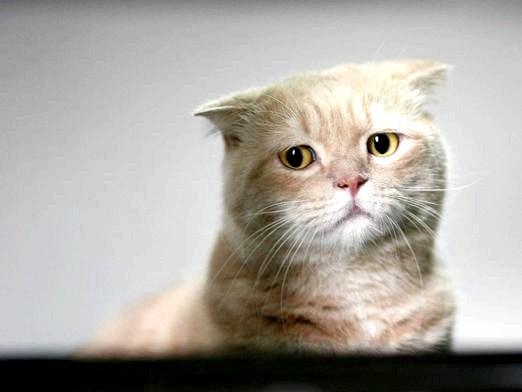 Фото - Куди віддати кішку?