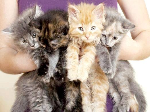 Фото - Куди віддати кошенят?