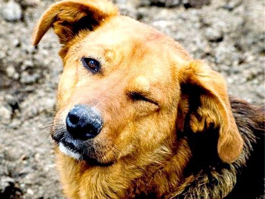 Фото - Куди віддати собаку?