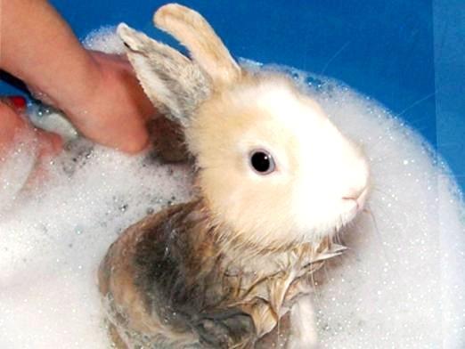 Фото - Чи можна купати кроликів?
