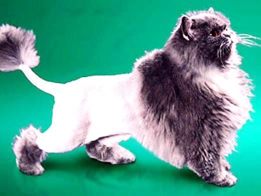 Фото - Чи можна стригти кішок?