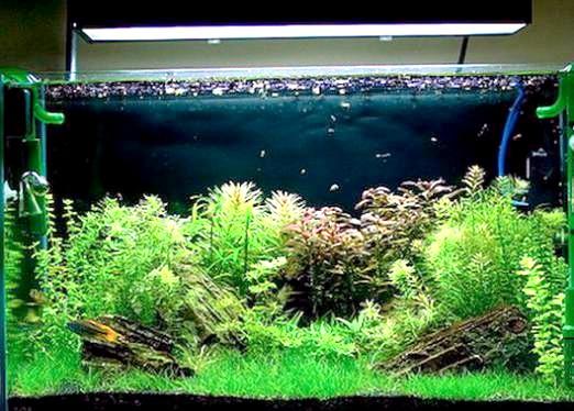Фото - Чи потрібен фільтр в акваріумі?