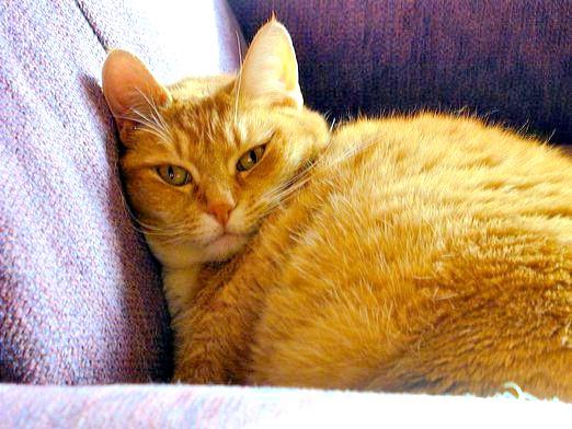 Фото - Про що думають кішки?