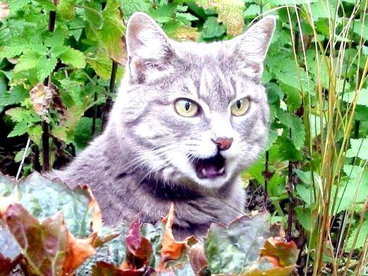 Фото - Про що говорять кішки?