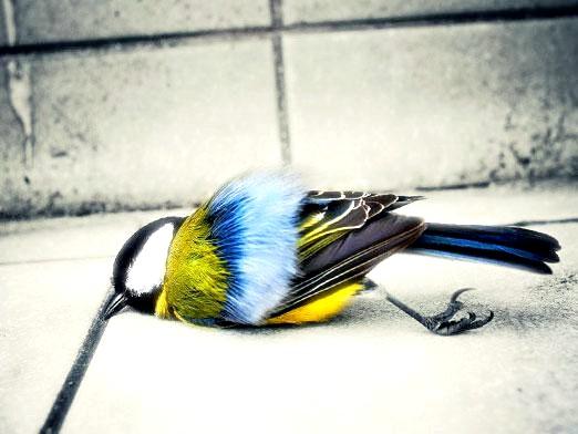Фото - Чому гинуть і вмирають птахи?