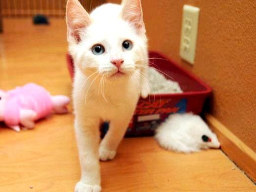 Фото - Чому кішка паскудить?
