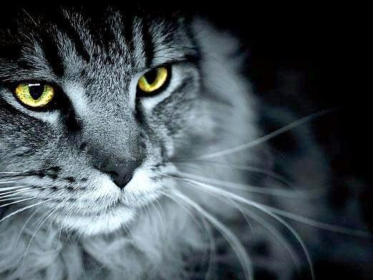 Фото - Чому кішка дивиться в очі?