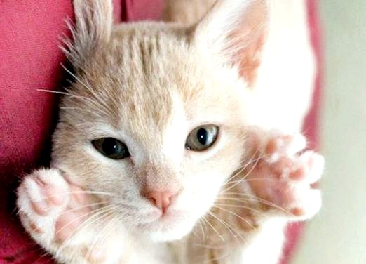 Фото - Чому кішка топче вас лапками?