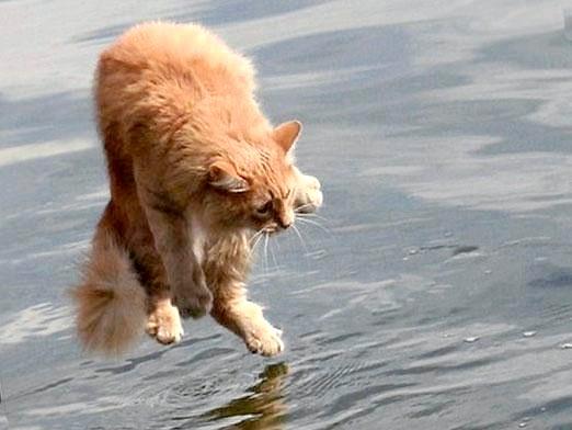 Фото - Чому кішки бояться води?