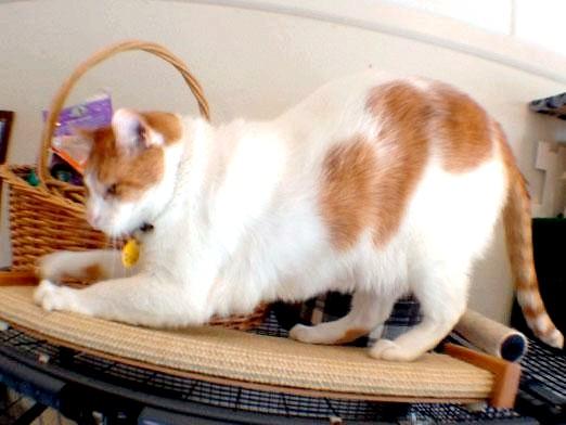 Фото - Чому кішки топчуться?