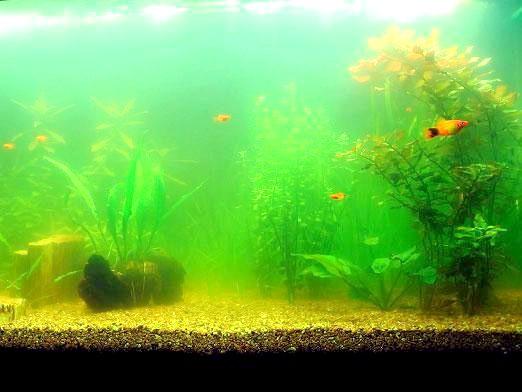 Фото - Чому каламутніє вода в акваріумі?