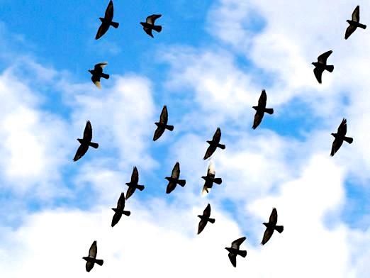 Фото - Чому птахи відлітають?