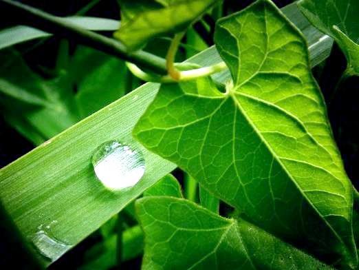 Фото - Чому рослини зелені?