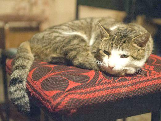 Фото - Чому гурчать кішки?