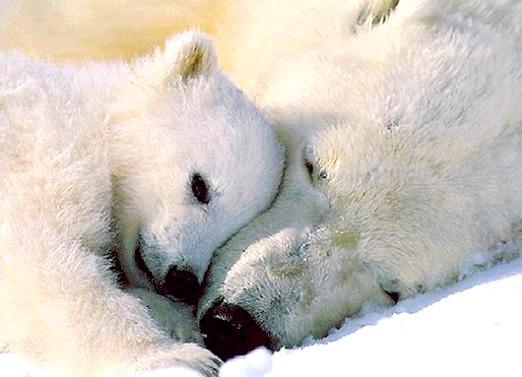 Фото - Чому впадають в сплячку?