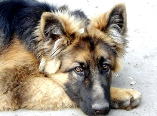 Фото - Пронос у собаки: що робити?
