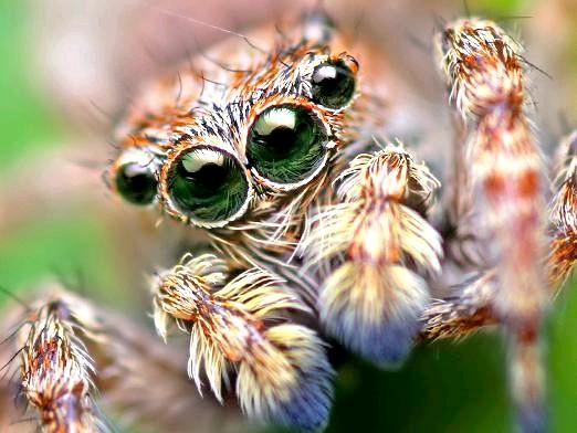 Фото - Скільки очей у павука?