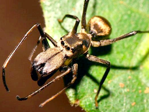 Фото - Скільки ніг у павука?
