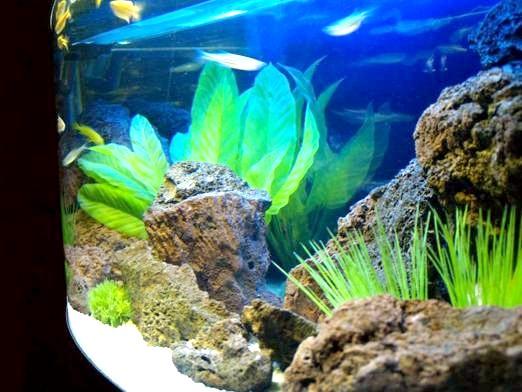 Фото - Скільки відстоювати воду для акваріума?