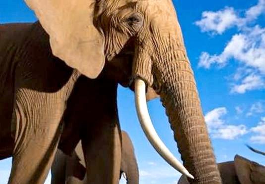 Фото - Скільки важить слон?