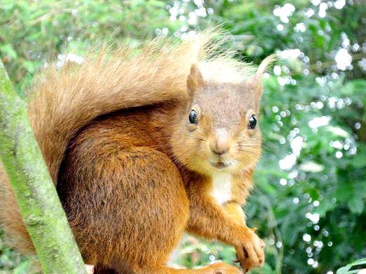 Фото - Скільки живе білка?
