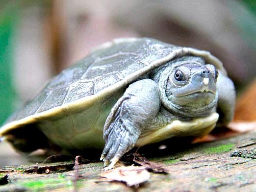 Фото - Скільки живуть черепахи?