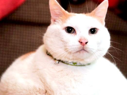 Фото - Скільки живуть кішки?