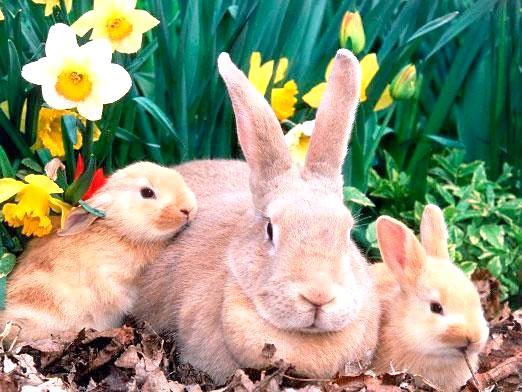 Фото - Скільки живуть кролики?