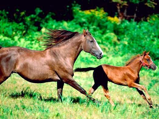 Фото - Скільки живуть коні?