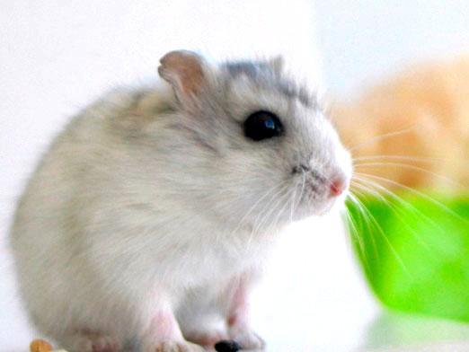 Фото - Скільки живуть миші?