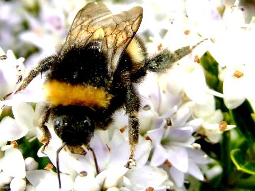 Фото - Скільки живуть бджоли?
