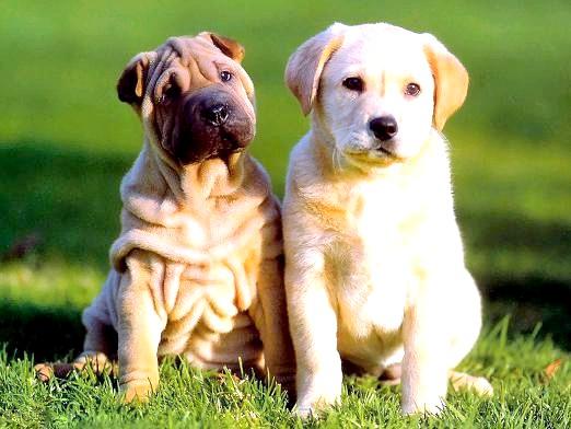 Фото - Скільки живуть собаки?