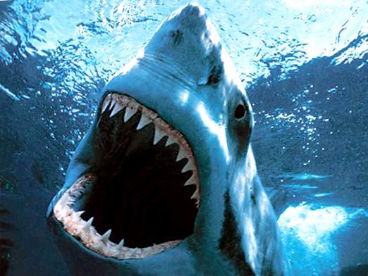 Фото - Скільки зубів у акули?