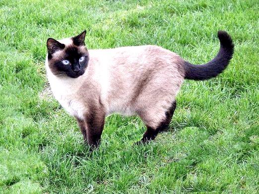 Фото - У кішки запор: що робити?