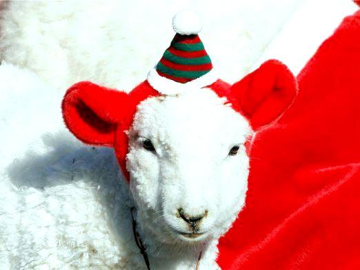 Фото - У чому зустрічати рік Вівці?