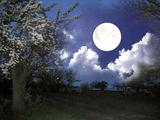 Фото - В якій місячний день народився?