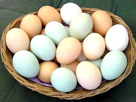 Фото - Чи шкідливі яйця?
